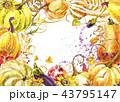 かぼちゃ カボチャ 南瓜のイラスト 43795147