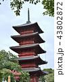 池上本門寺 五重塔 日蓮宗の写真 43802872