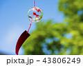 風鈴 夏 風物詩の写真 43806249