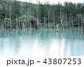 池 樹木 樹の写真 43807253
