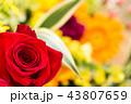 バラ 薔薇 花の写真 43807659