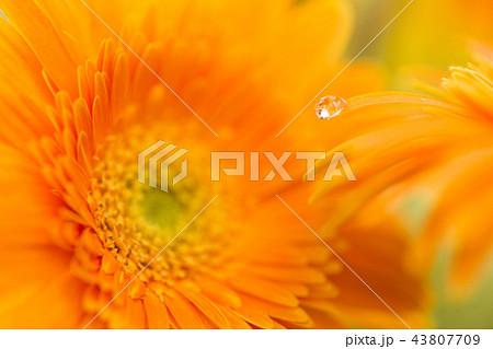 花と水滴 43807709