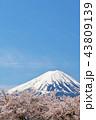 富士山 青空 春の写真 43809139