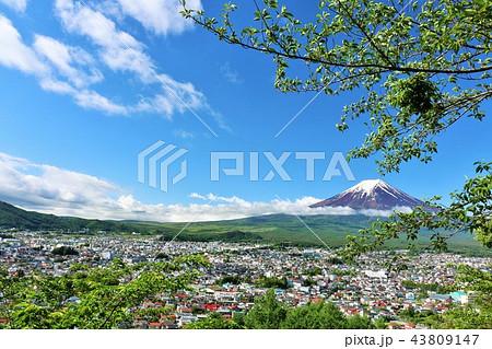 五月晴れの青空 新緑の風景と富士山 43809147