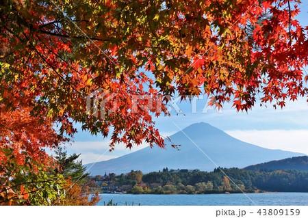 秋の青空と紅葉 そして富士山 43809159