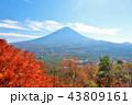 富士山 秋 紅葉の写真 43809161