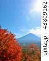 富士山 秋 紅葉の写真 43809162