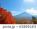 富士山 秋 紅葉の写真 43809163