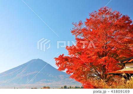 富士山と秋の紅葉 43809169