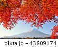 富士山 秋 紅葉の写真 43809174