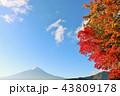 富士山 秋 紅葉の写真 43809178