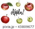 りんご アップル リンゴのイラスト 43809677