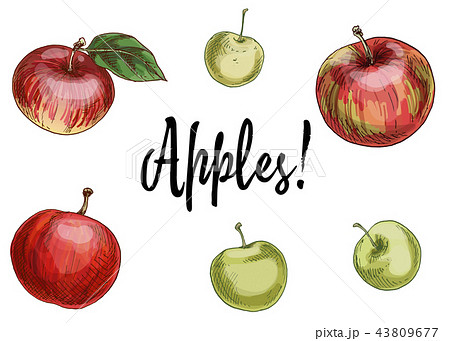 Illustration with different apples, red and green  43809677