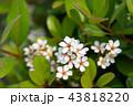 士林官邸花卉 台湾台北士林官邸の植物 Presidential Residence Garden 43818220