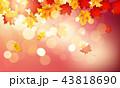 紅葉 秋 楓のイラスト 43818690
