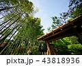 竹林のある庭園 43818936