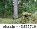 Old moss wrapped tree stump 43822719