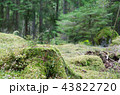 Moss covered old stump 43822720