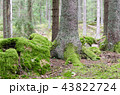 Moss covered forest ground 43822724