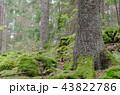 Green spruce forest ground 43822786