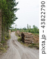 Log-piles by a gravel roadside 43822790
