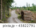 Woodpiles by a gravel road side 43822791