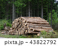 Logs in a woodpile 43822792