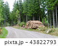 Woodpile by roadside in a coniferous forest 43822793