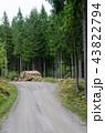 Wood pile by gravel roadside 43822794