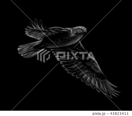 Portrait of a flying falcon on a black background. 43823411