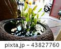 盆栽 ボンサイ 鉢植 43827760