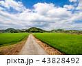 水田 田んぼ 田舎道の写真 43828492