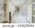 学校イメージ(廊下) 43828694