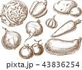 ベジタブル 野菜 にんじんのイラスト 43836254