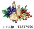 ぶどう ブドウ 葡萄のイラスト 43837950