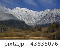 初冬の上高地大正池から初冠雪した北アルプス穂高連峰 43838076