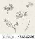 Vintage engraved illustrations of blossoms blooms 43838286