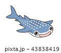 ジンベイザメ 43838419