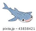 ジンベイザメ 43838421