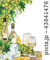 ワイン ぶどう ブドウのイラスト 43841476