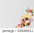 和柄 花 菊のイラスト 43846911