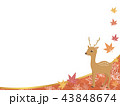 鹿 紅葉 秋のイラスト 43848674