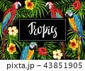 鳥 エキゾチック エキゾティックのイラスト 43851905