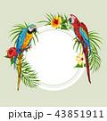 鳥 エキゾチック エキゾティックのイラスト 43851911