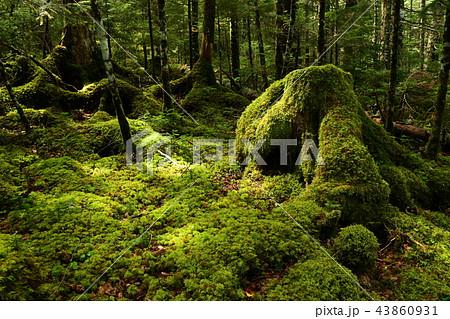 苔の森 43860931