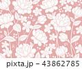 花 ピンク 薔薇のイラスト 43862785