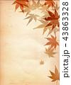 紅葉 和風 紅葉狩り 和柄 もみじ フレーム 古紙 43863328