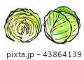 水彩 挿絵 野菜のイラスト 43864139