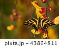 お花 フラワー 咲く花の写真 43864811