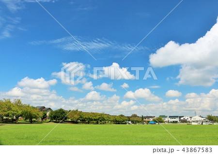 爽やかな青空と街の公園 43867583